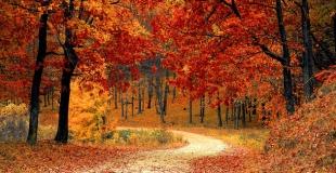 Investissement forestier : quel rendement et réduction d'impôt attendre ?